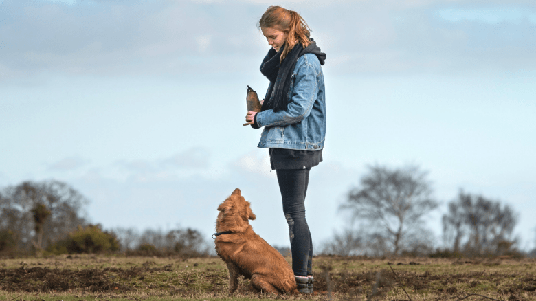 dog staring at owner with intent in the middle of a field